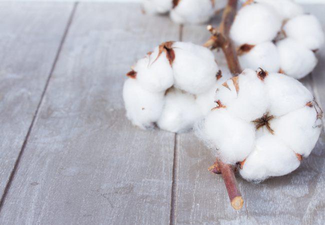 Kosmetikprodukte mit unscheinbaren Inhaltsstoffen – Baumwolle, Seide und viele andere